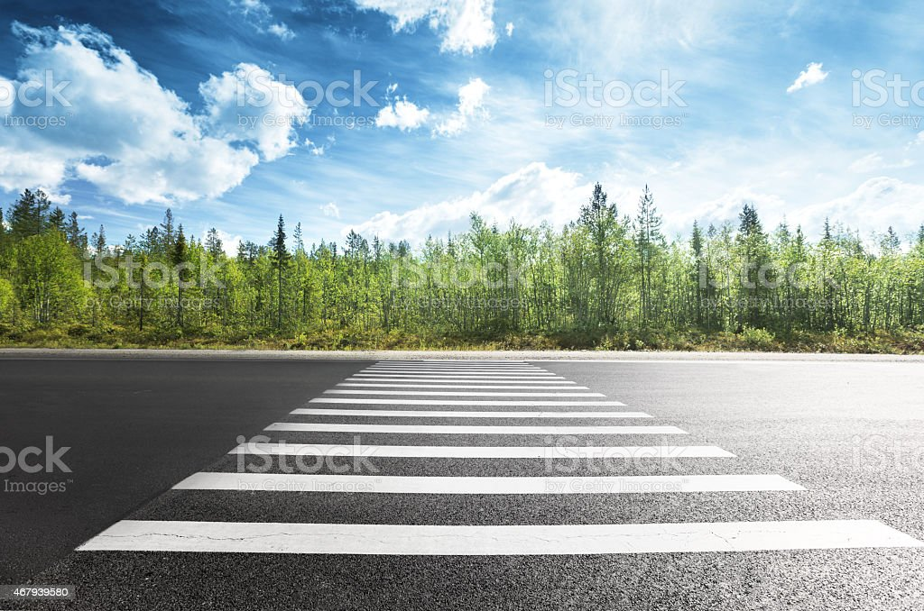 asphalt road in forest stock photo