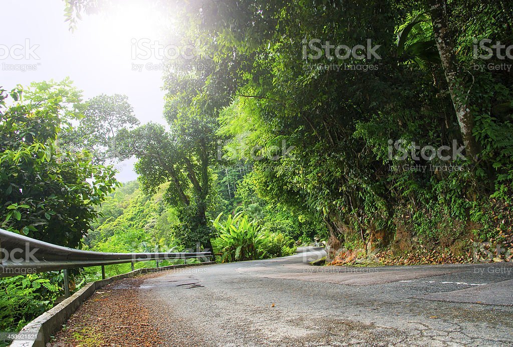 Asphalt road in tropical forest. royalty-free stock photo