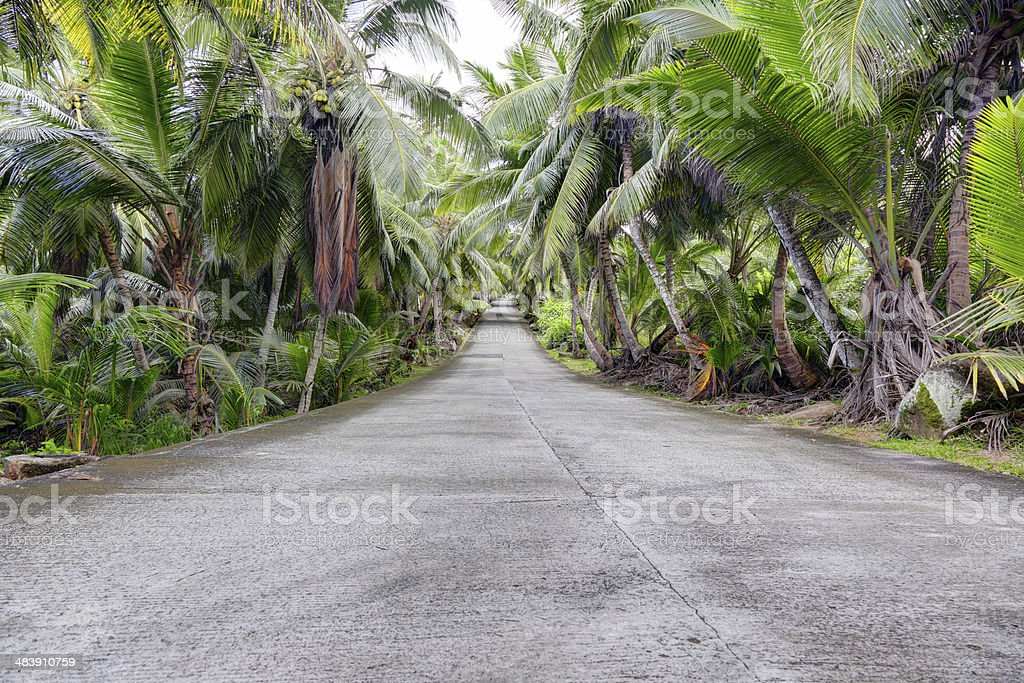 Asphalt road in tropical forest royalty-free stock photo