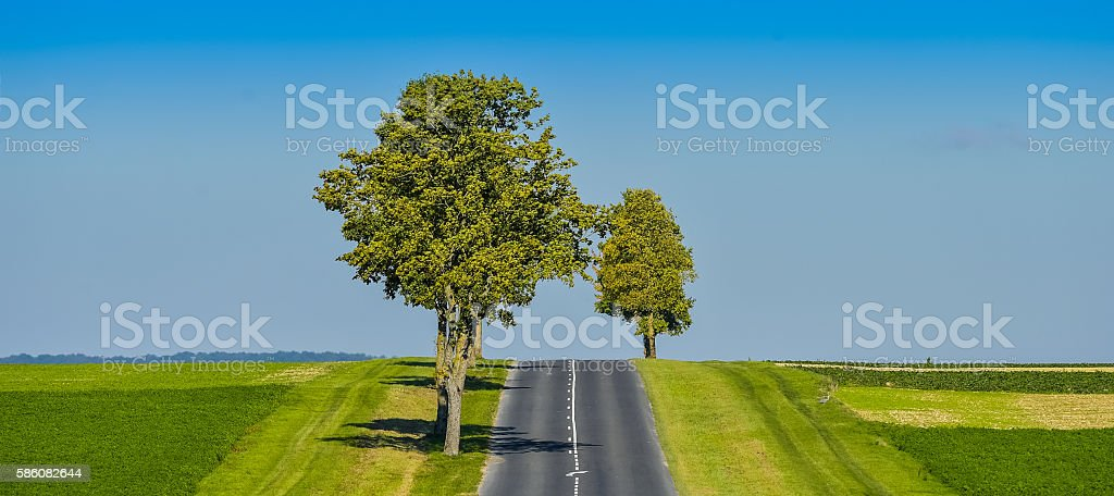 Asphalt road lined with fields and trees in Champagne France stock photo