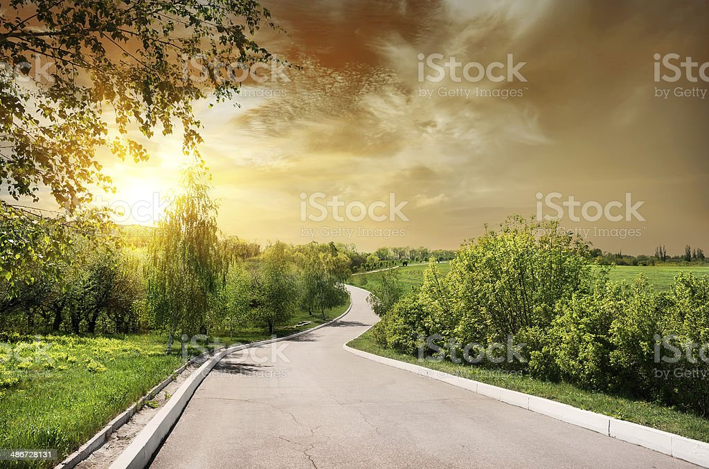 Asphalted road and birches stock photo