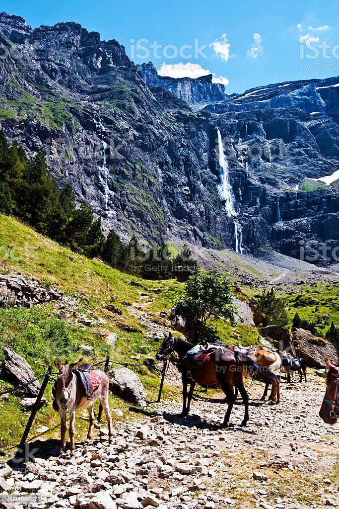 Ass and Horses in approach to Gavarnie Circus in Pyrenees stock photo