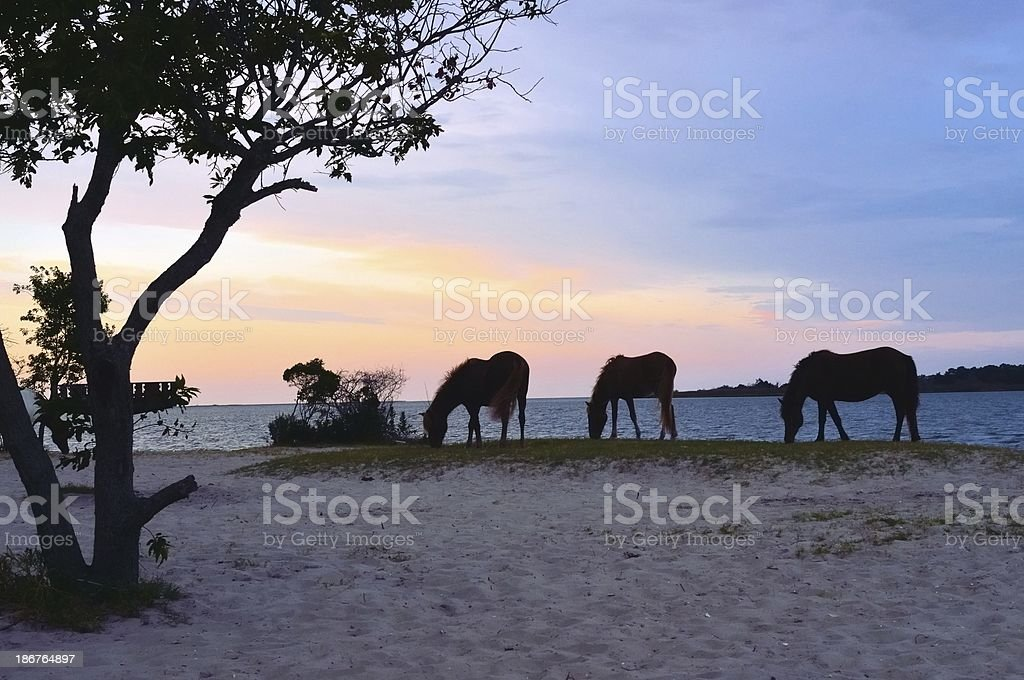 Assateague Ponies At Dawn stock photo