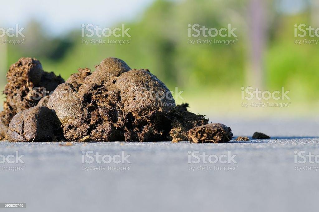 Assateague Pony Poop stock photo