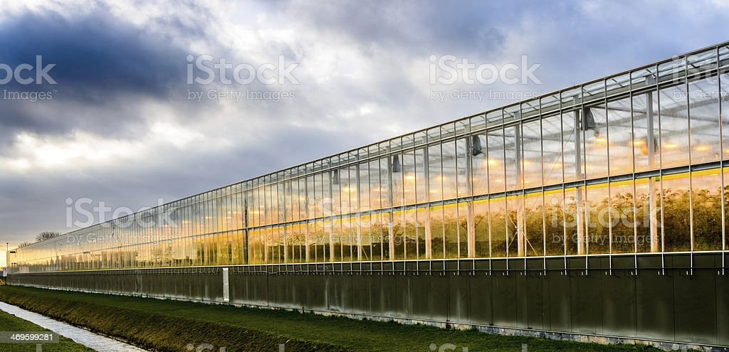 assimilation lights in a greenhouse stock photo