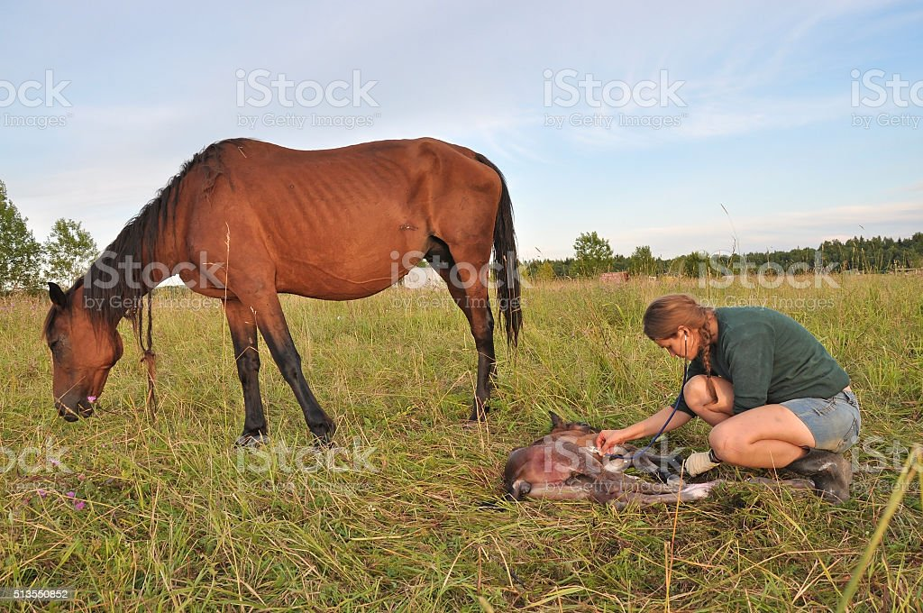 Assisting a newborn foal stock photo