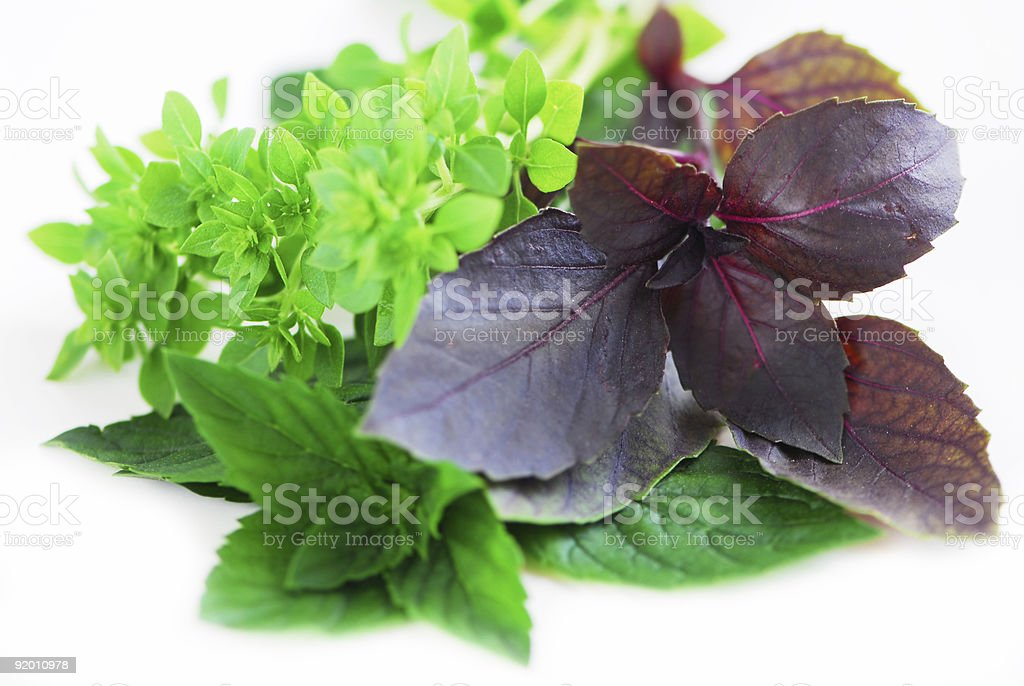Assorted basil herbs royalty-free stock photo