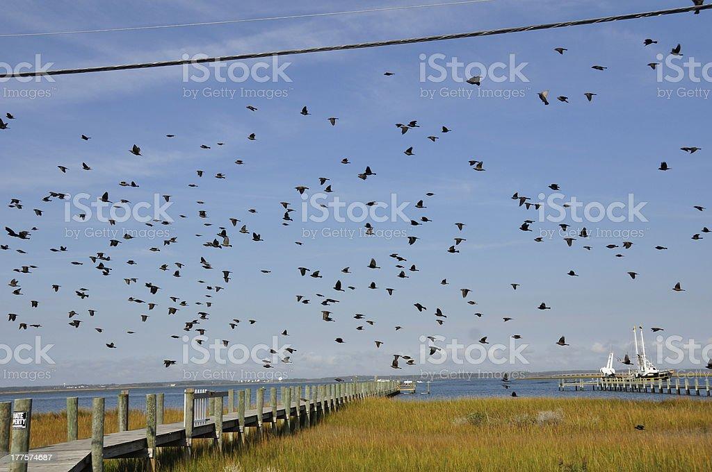 Assorted birds royalty-free stock photo