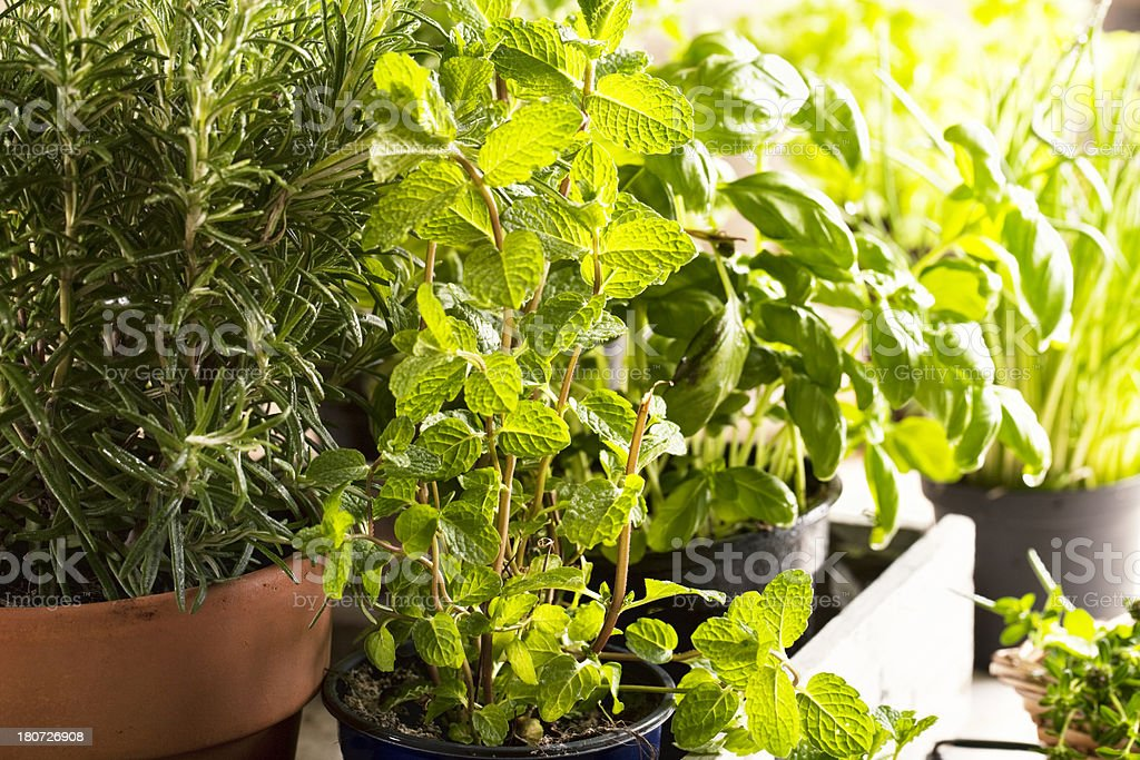 assorted herbs in pots royalty-free stock photo