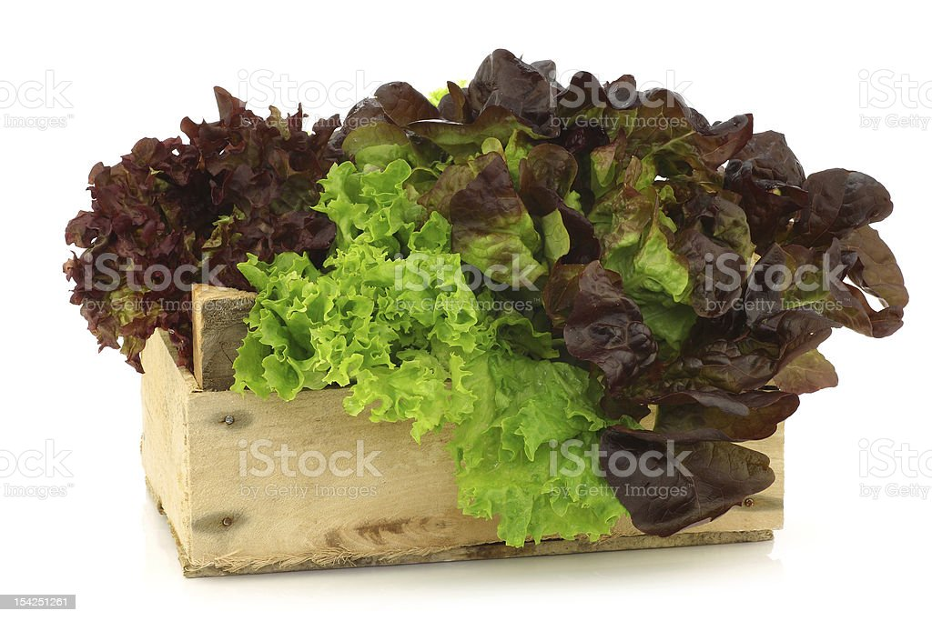 assorted lettuce in a wooden box stock photo
