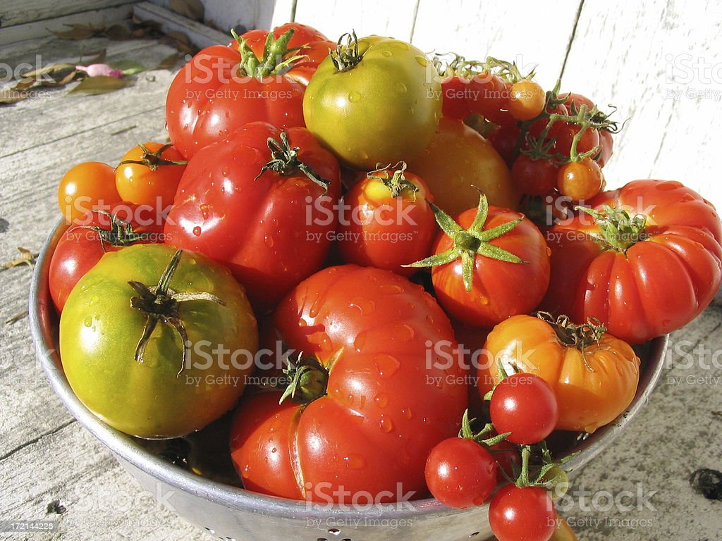 Assorted Organic Homegrown Heirloom Tomatoes Summer Vegetables Produce stock photo