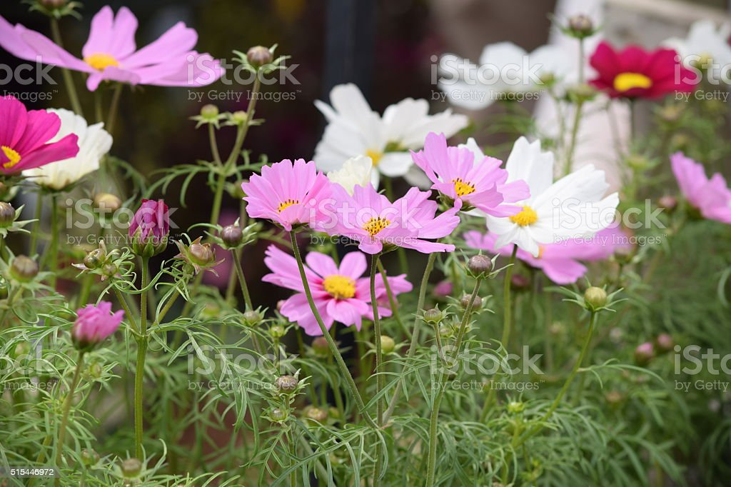 Assorted pink and white Wildflowers for background stock photo
