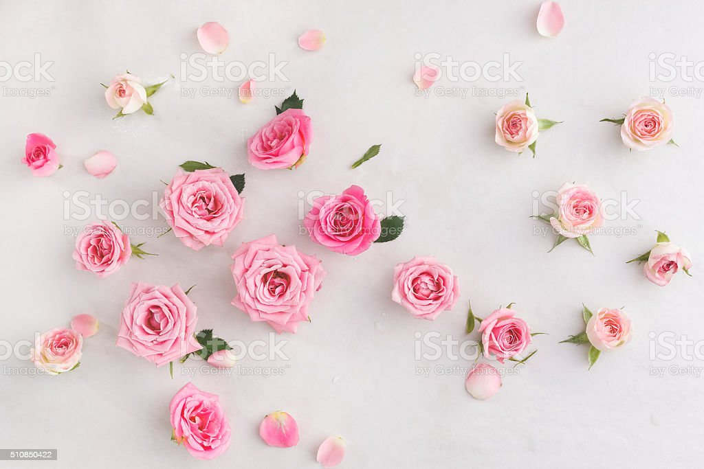 Assorted roses heads stock photo