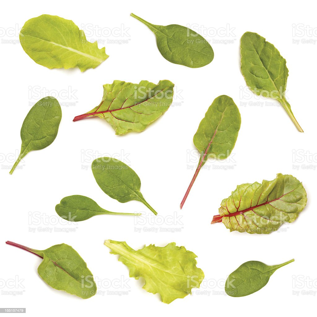 Assorted Salad Leaf Greens stock photo