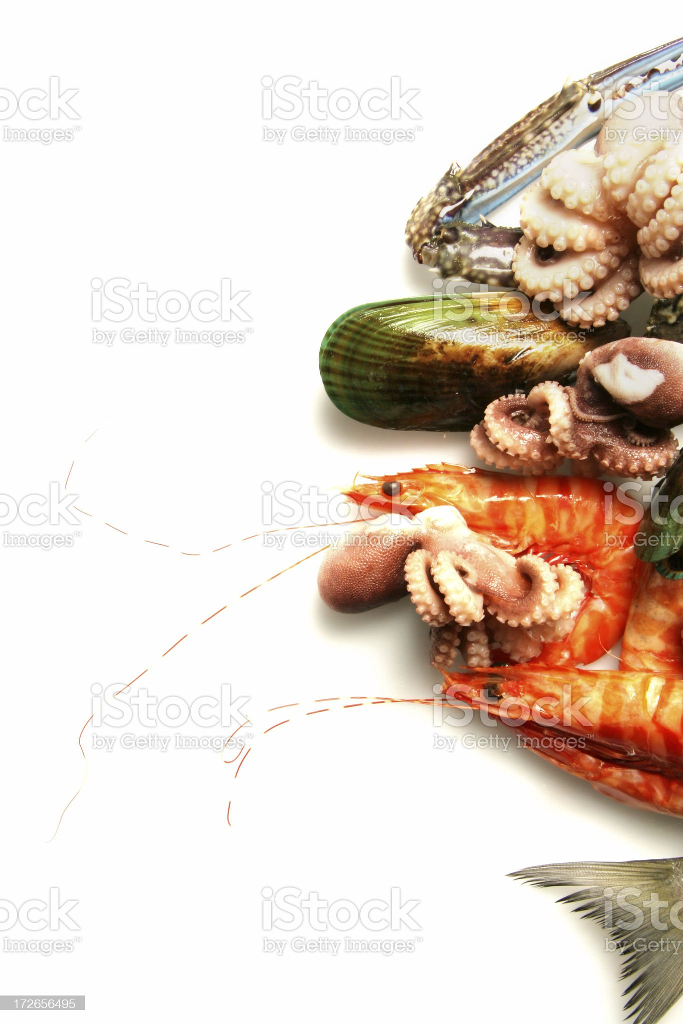 Assorted seafood royalty-free stock photo