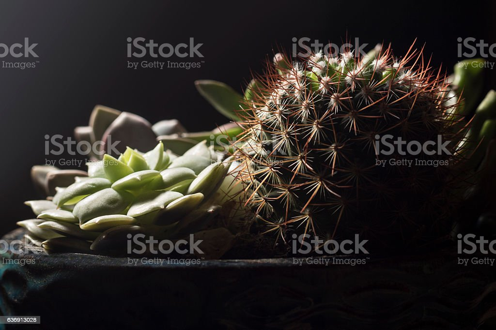 Assorted Succulents stock photo