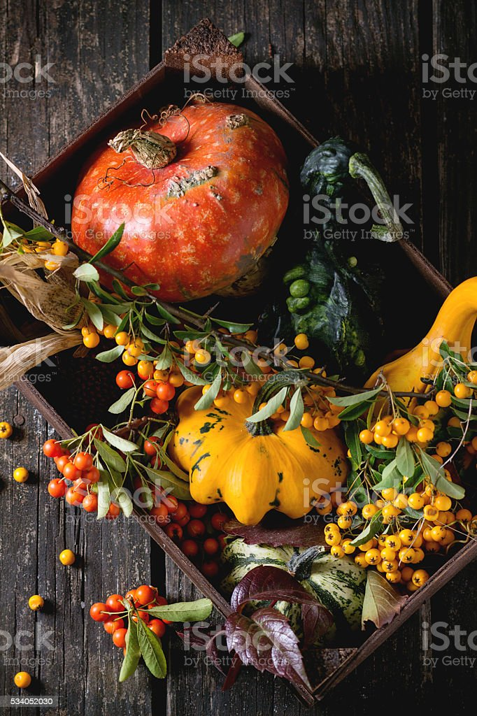 Assortment of different pumpkins and berries stock photo
