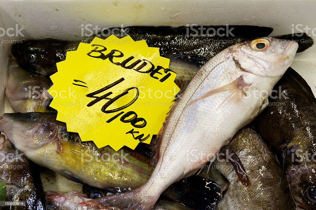 Assortment of Fish for Stewing royalty-free stock photo
