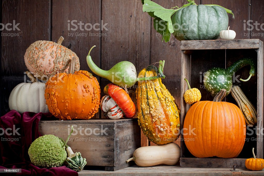 Assortment of gourds displayed on wood stock photo