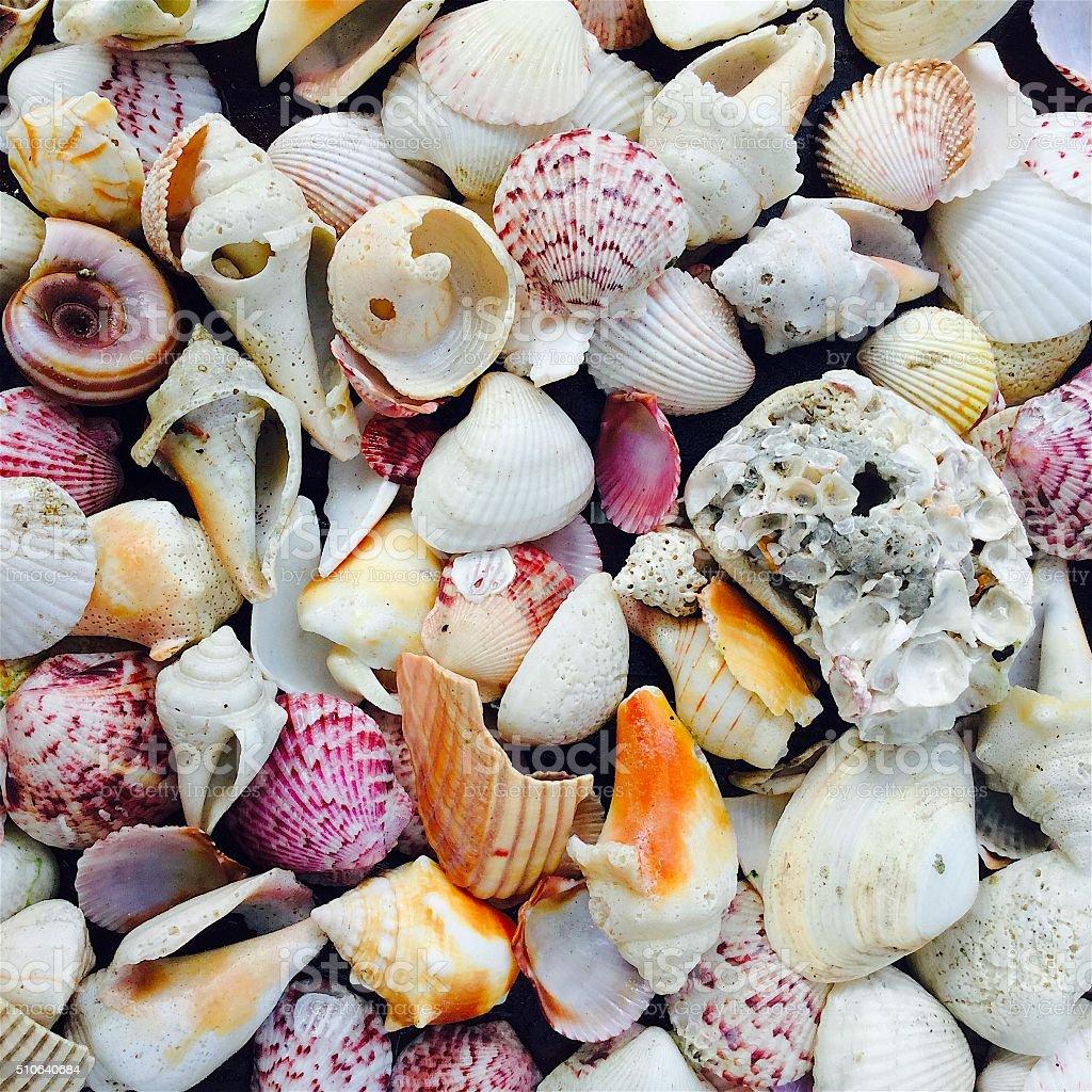 Assortment of seashells nature background stock photo