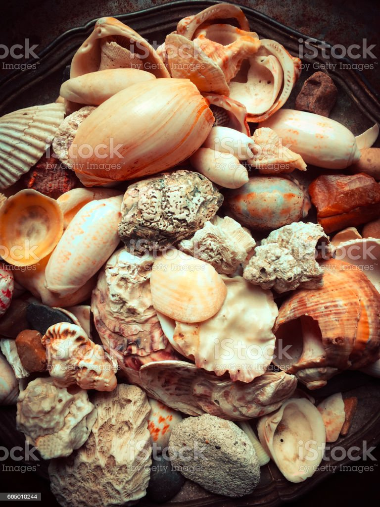 Assortment of seashells on old silver plate stock photo
