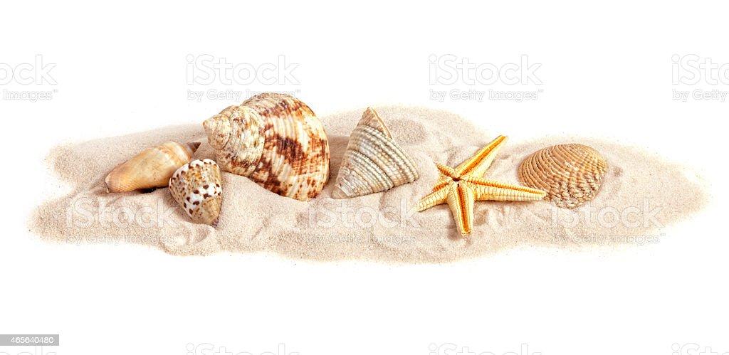 Assortment of seashells on small strip of sand, white background stock photo