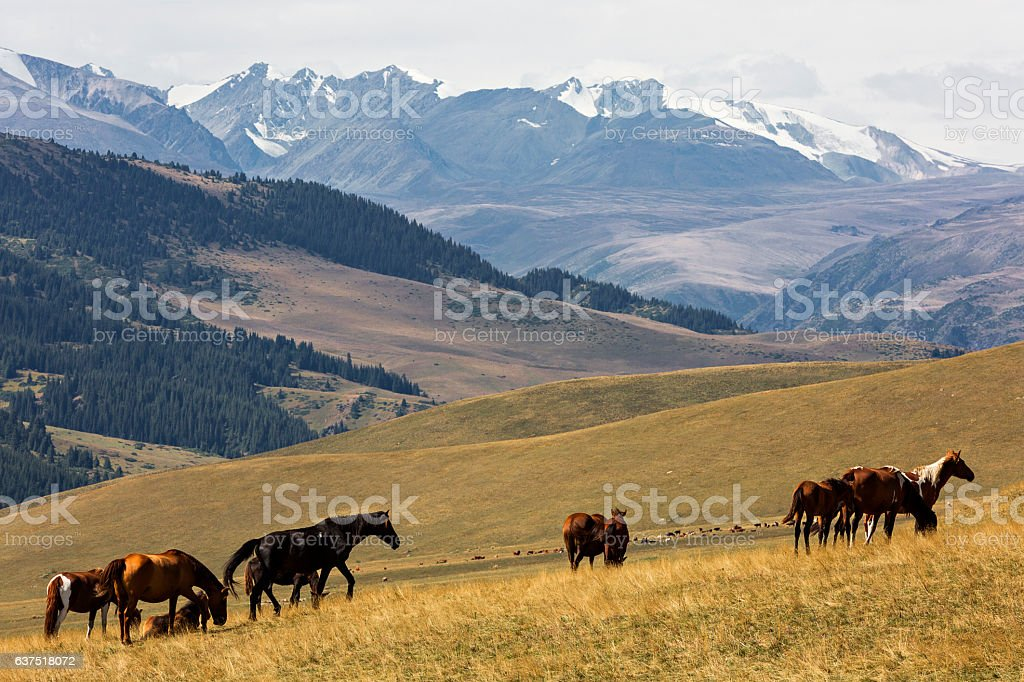 Assy Plateau in Kazakhstan stock photo