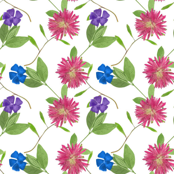 New England Aster Clip Art, Vector Images & Illustrations - iStock