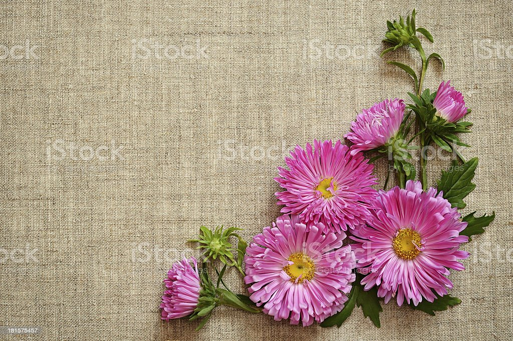 Asters on canvas background royalty-free stock photo