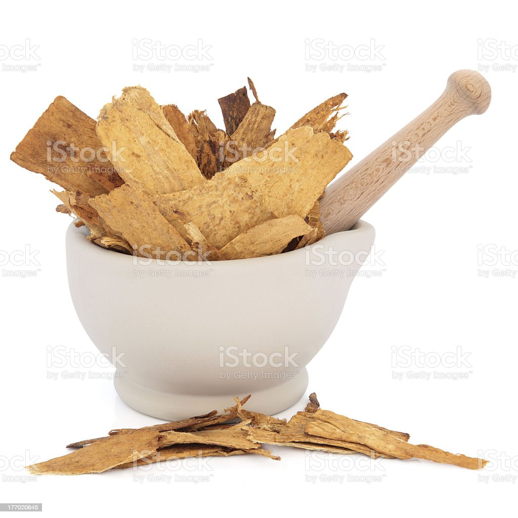 Astragalus Root Herb stock photo