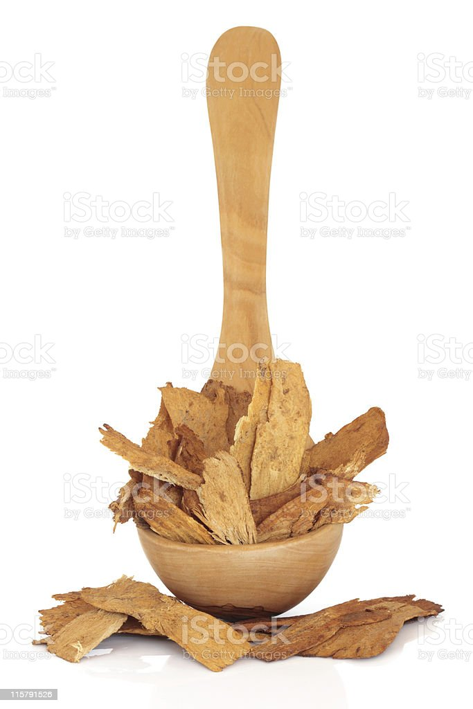 Astragalus Root stock photo