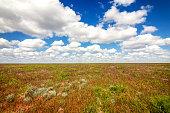 Astrakhan steppe under beautiful sky. Panorama of nature near salt