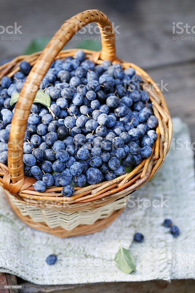 Astringent fruit Prunus in the basket stock photo