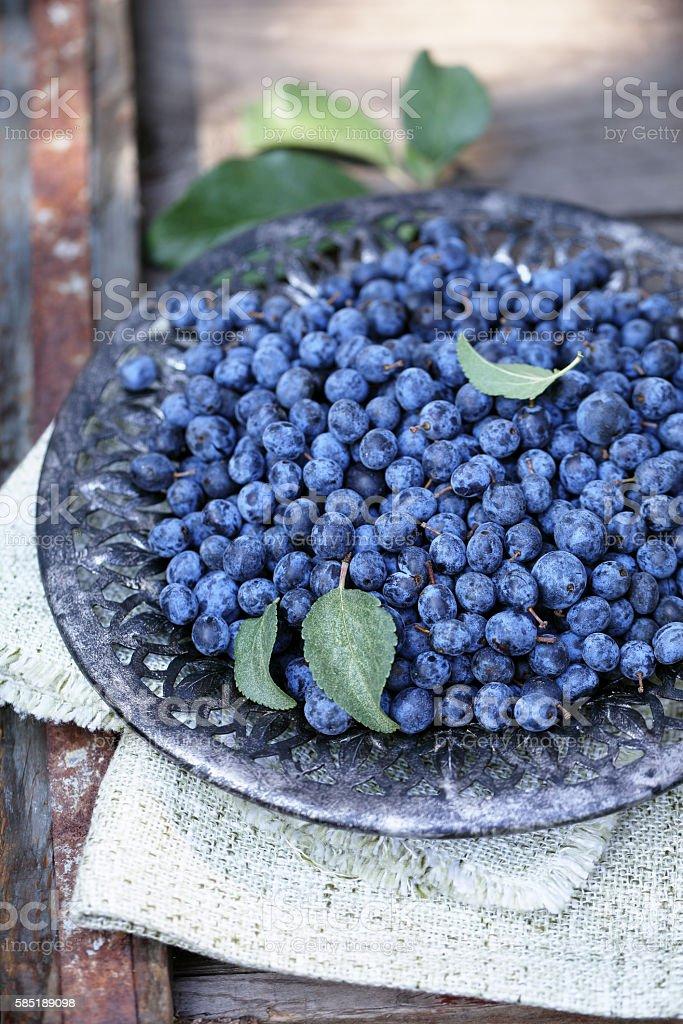 Astringent healing berry Prunus stock photo