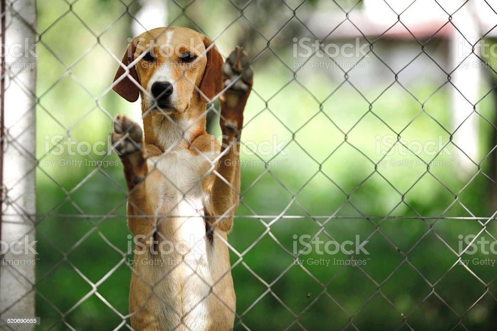 Asylum for dogs stock photo