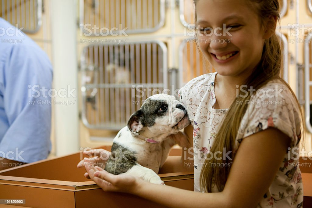 At animal adoption centre stock photo