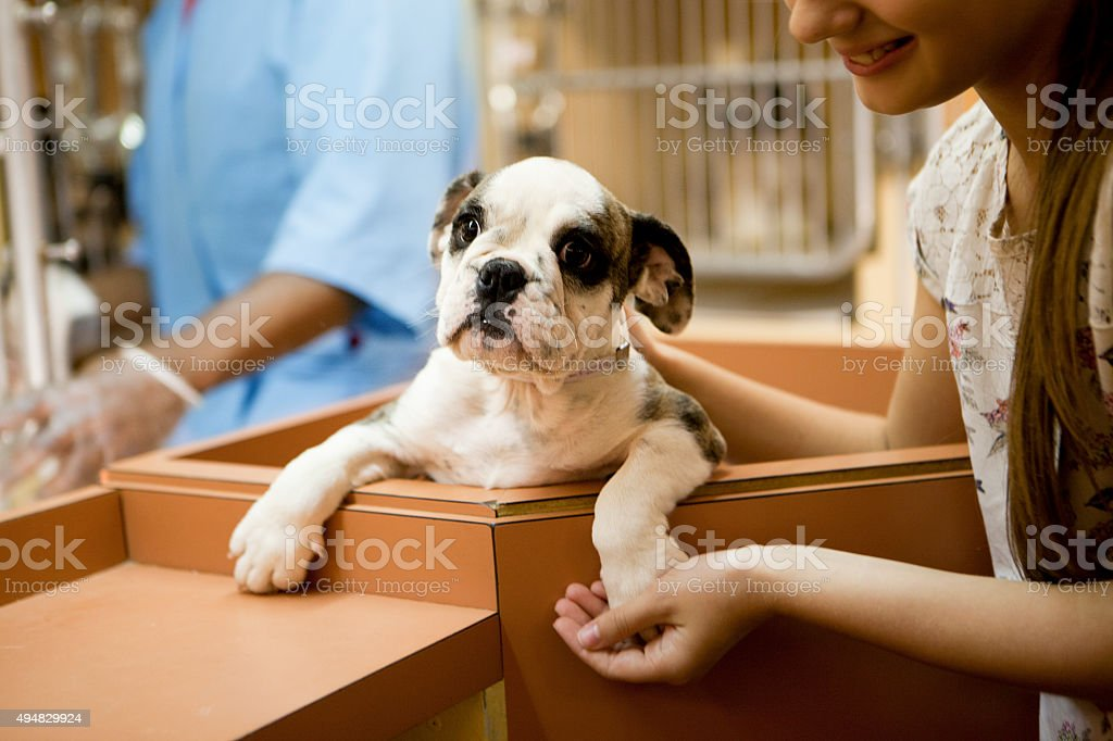 At animal adoption centre stock photo