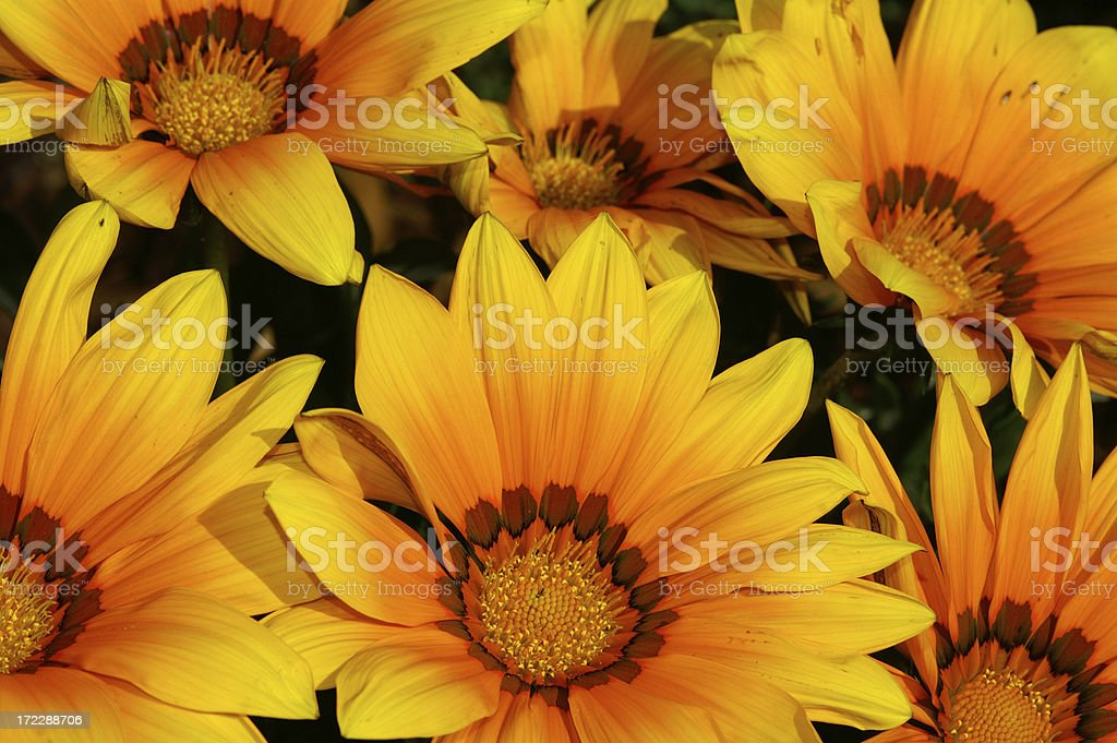 At noon flowers royalty-free stock photo