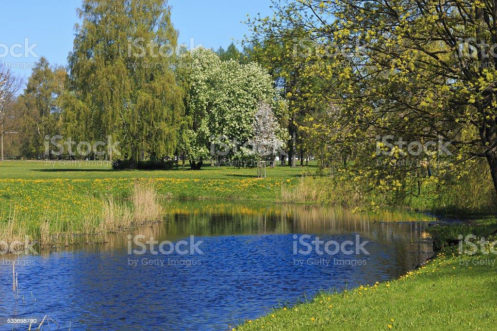 At park. stock photo