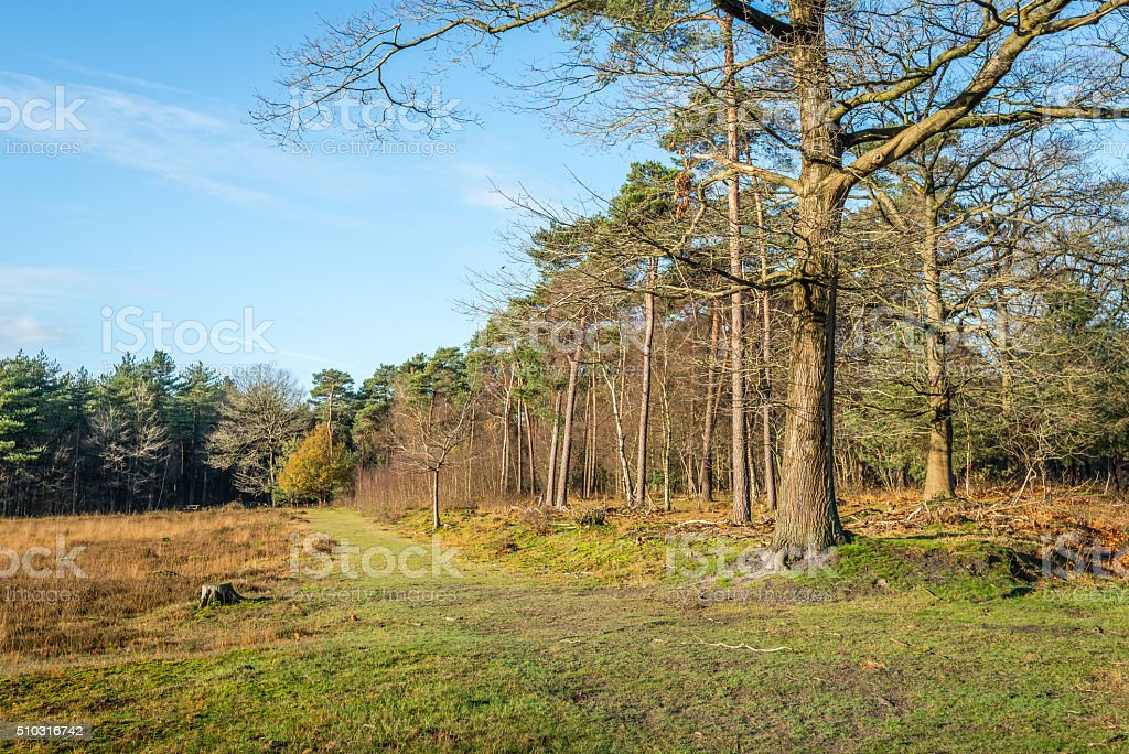At the edge of the forest in the autumn season stock photo