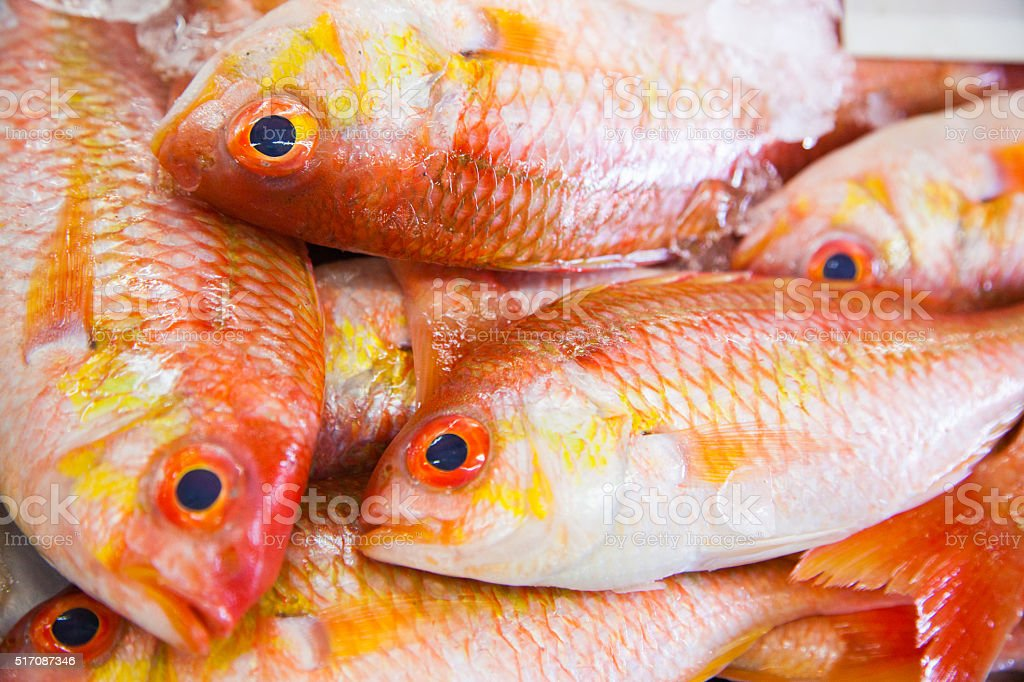 At the Fish market in Abu Dhabi stock photo