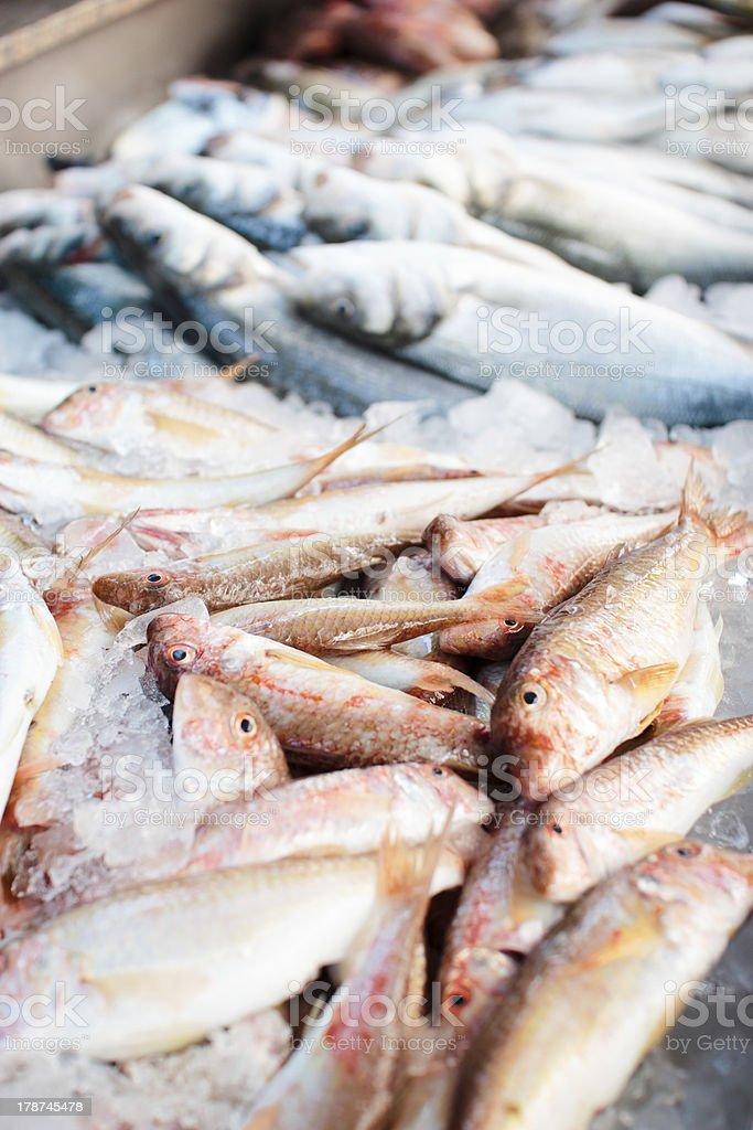 At the fish market stock photo