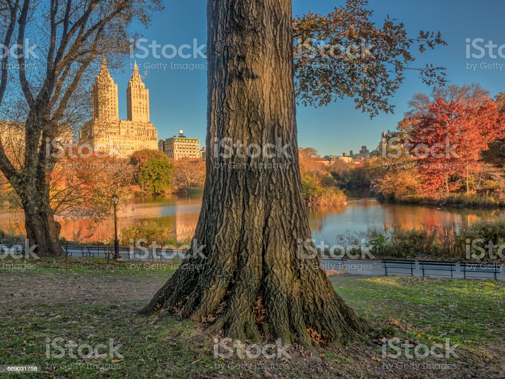 At the lake in autumn stock photo