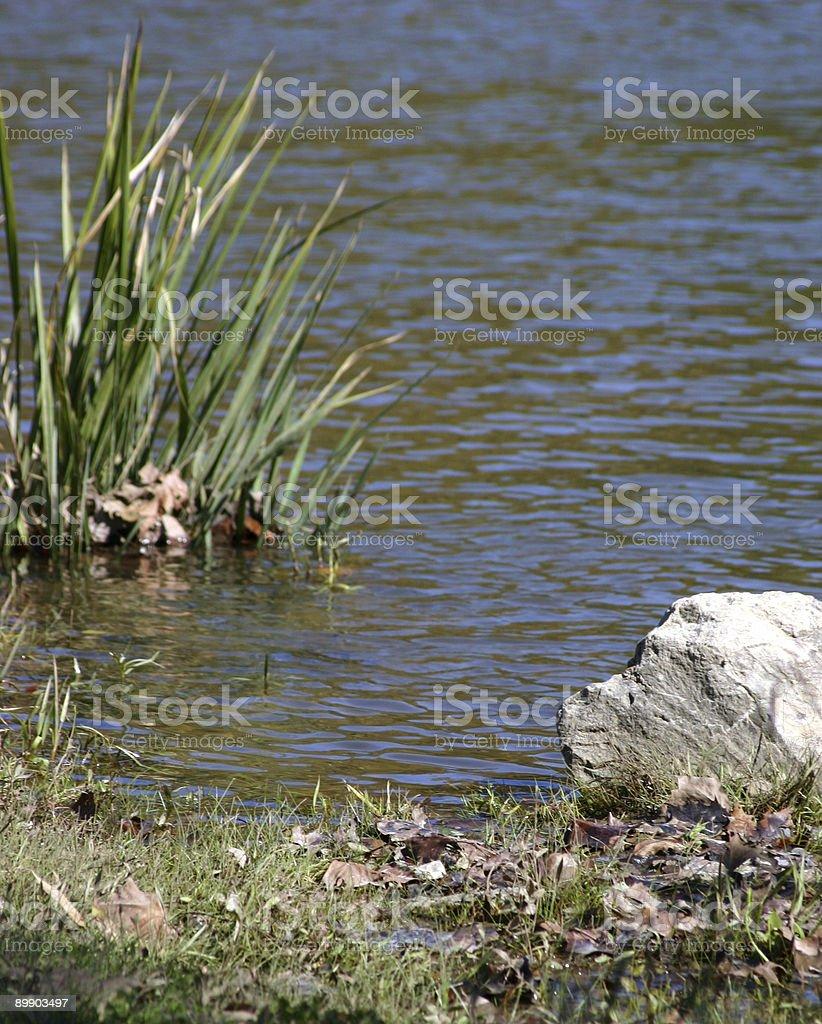At water's grassy edge royalty-free stock photo