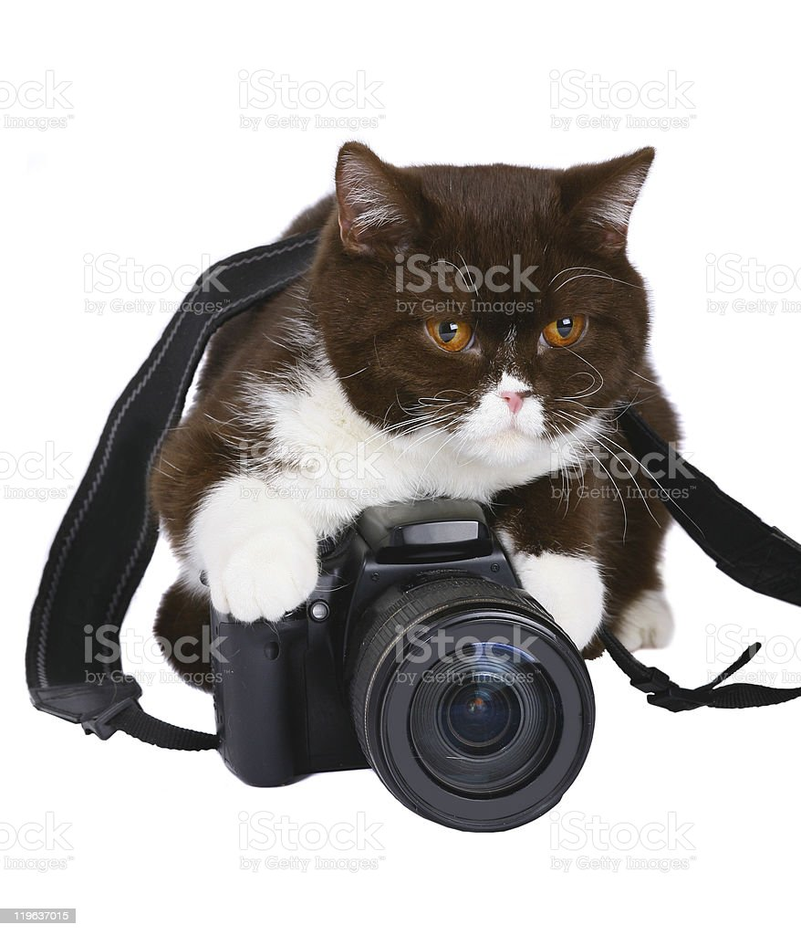 Сat with a camera. stock photo