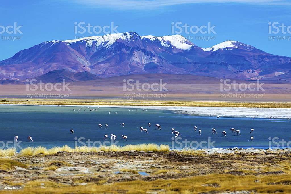 Atacama Desert with wild Flamingos, Chile stock photo