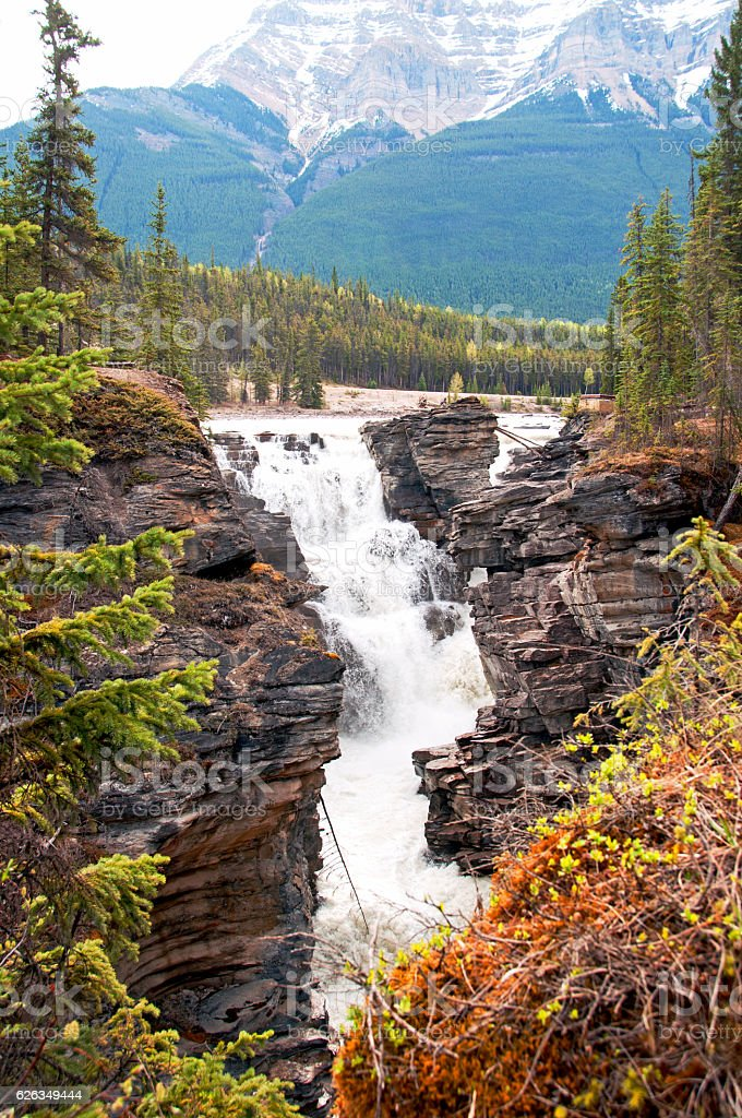 Athabasca Falls in autumn colors, Jasper National Park, Canada stock photo