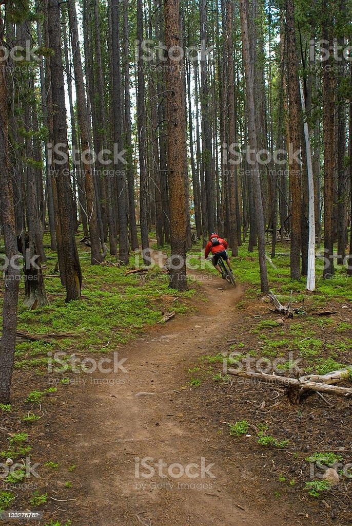 Athlete Mountain Biking Singletrack in the Mountains stock photo