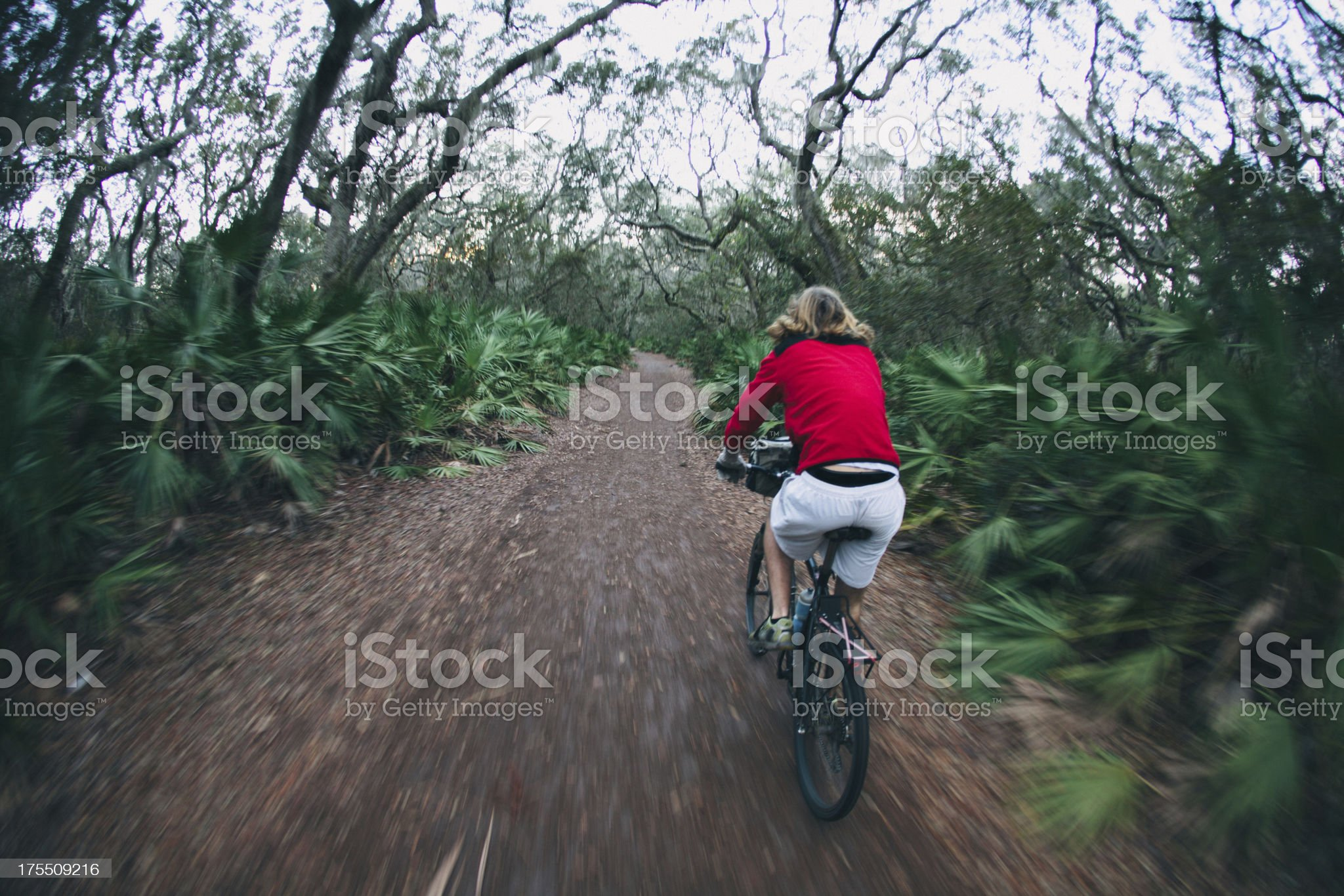 Athletic Male biking on wooded trail at dusk royalty-free stock photo