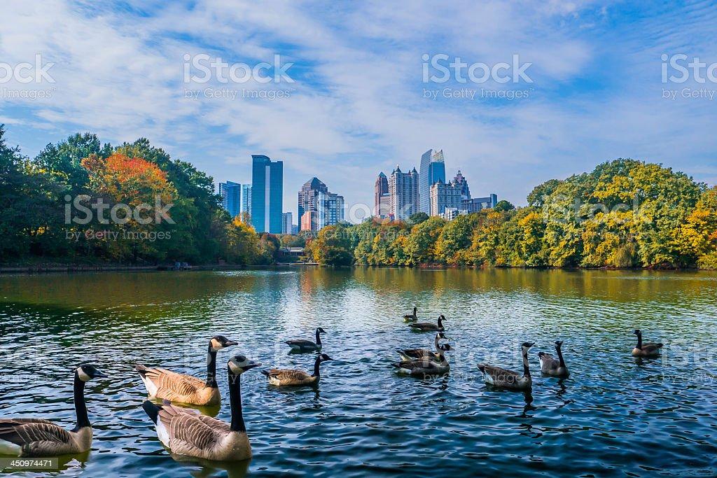 Atlanta Midtown Skyline with Ducks in Lake stock photo